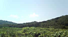飯舘村の美しい緑